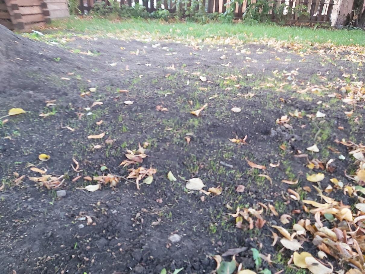 Wächst Gras drüber