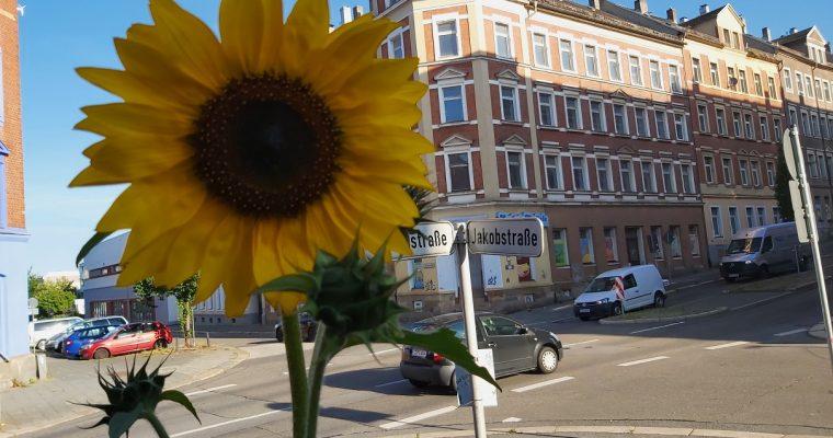 (keine) Sonnenblumenme(h)er